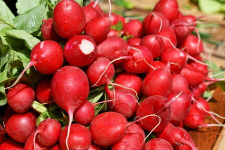 Bunch of fresh red radish at the marketplace