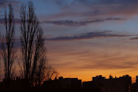 poplars: Skyscape with poplars and city silhouette at dawn