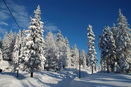 icily: Road covered with snow in forest on a sunny day