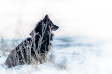frostbitten: Black dog in a snowy white and barren landscape devoid of life, looking towards the new tomorrows
