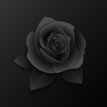 underneath: Rose with three petals underneath. Vector illustration.
