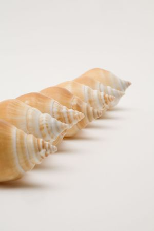 decorative seashells Stock Photo - 3070237