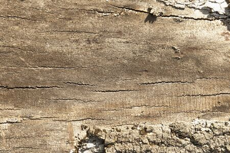 Old rich beautiful wood texture background. Wood wall for designer and text. Horizontal image.