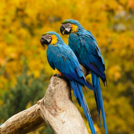 confiding: two parrots sitting on a bole