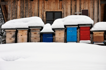 colorful beehives in the snow Stock Photo