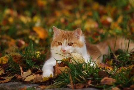 cat lying in the foliage