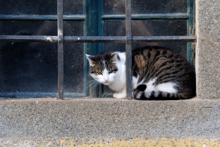 cagey: cat sitting on a window ledge behind lattice