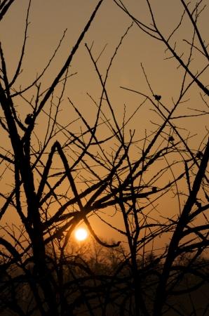 boles: branches at sunrise
