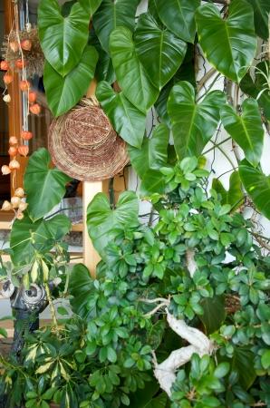 agleam: lush green plants, a bonsai and Chinese lantern in a winter garden
