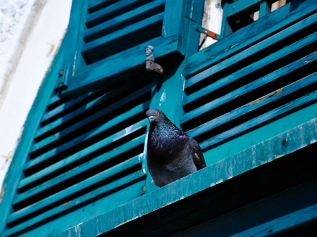 unclosed: pigeon sitting on a window ledge Stock Photo