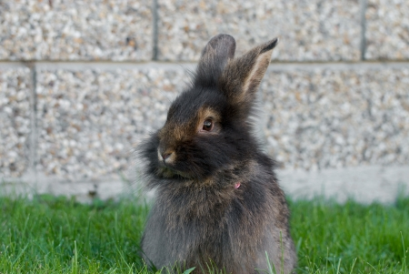confiding: rabbit sitting in the lawn
