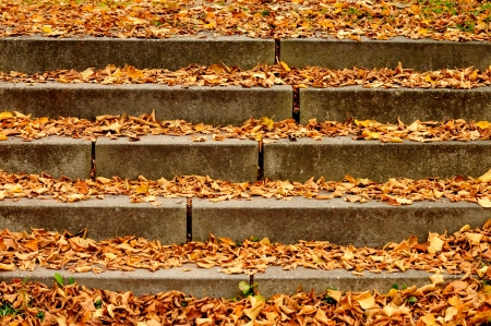 stages covered with autumn foliage
