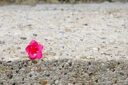 a pink bloom on a step Stock Photo