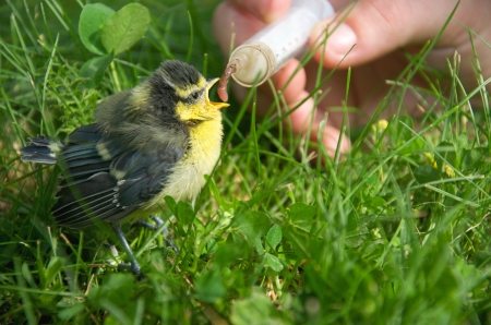 a young tit fed with an earthworm by a person Stock Photo - 15179250