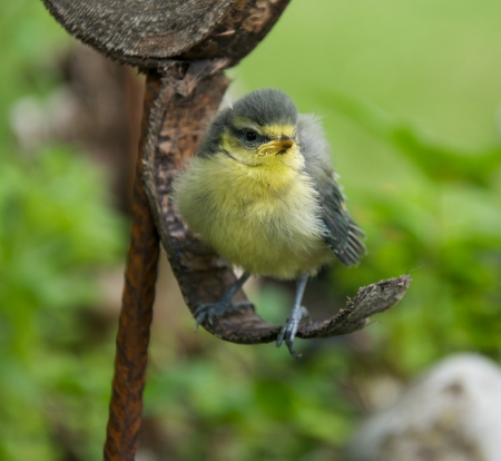 confiding: a fledgling sitting on a tree bark Stock Photo