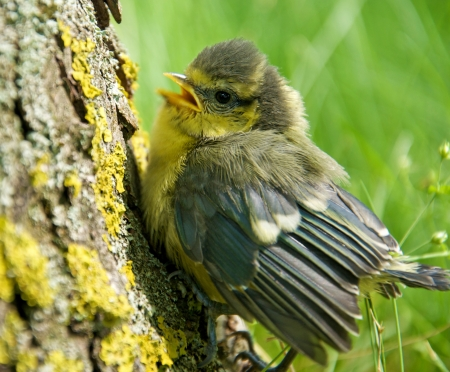 a young tit sitting on a trunk Stock Photo