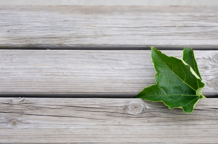 acuminate: a vine leaf on a wooden bench