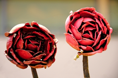 red roses made of iron  photo