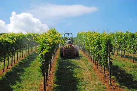 a farmer watering the vineyards with a tractor Archivio Fotografico