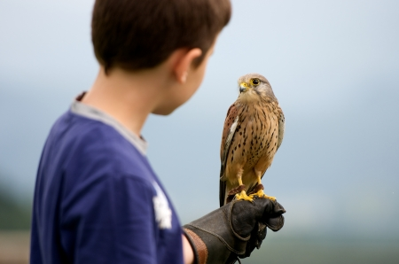 youngster holding a hawk