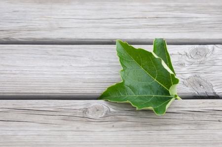 acuminate: vine leaf on a wooden bench