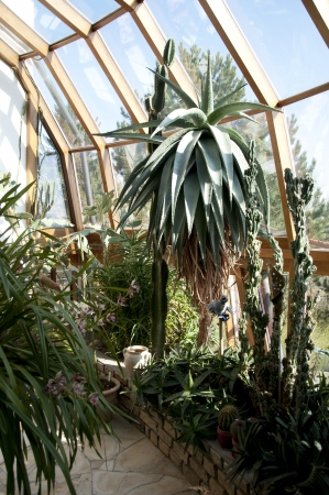 sunroom: winter garden with succulent cacti