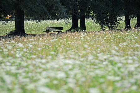 resting place in a park under trees surrounded by a field of white flowers photo