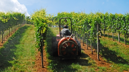 traction engine: a farmer watering the vineyards with a tractor Stock Photo