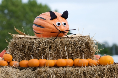 straw bales decorated with pumpkins photo