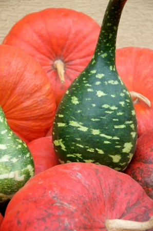 cucurbit: red and green pumpkins Stock Photo