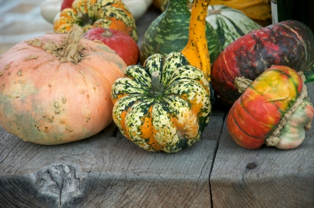 blotchy: many different pumpkins on a wooden table