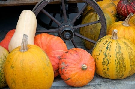 different pumpkins in front of a wooden cartwheel photo