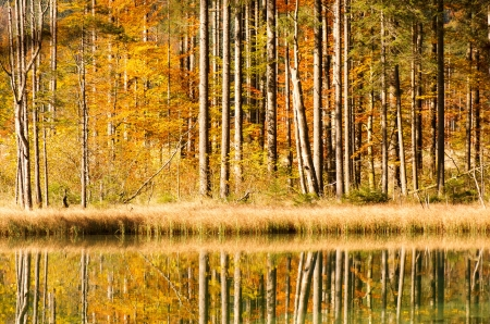 autumn trees mirroring in the lake