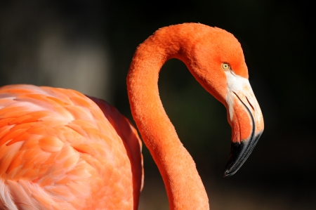 flamingo Stock Photo - 16268683