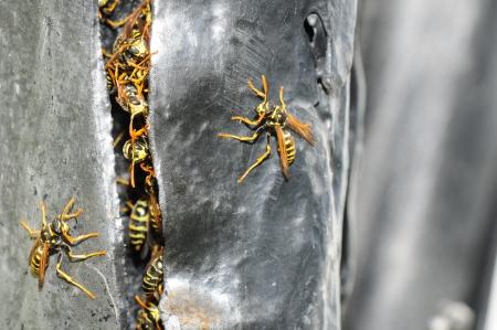 metal sculpture: nido di vespe in una fessura di una scultura di metallo