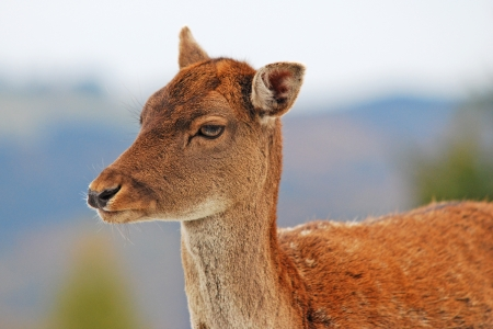 portrait of a young deer Stock Photo - 17584174