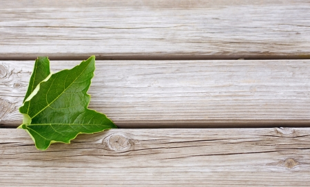 timber bench seat: vine leaf on a wooden background