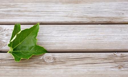 acuminate: vine leaf on a wooden background