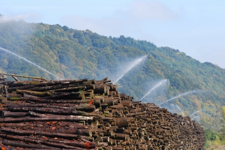irrigated: pile of wood irrigated with a sprinkler system Stock Photo