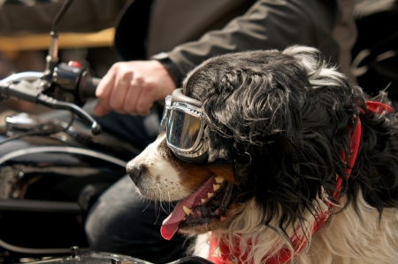 dog with sunglasses and necktie sitting in a sidecar machine