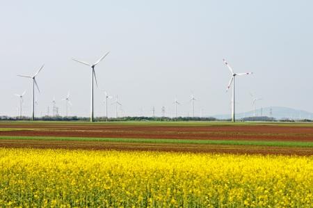 wind farm: parque y campo de colza en floraci�n Foto de archivo
