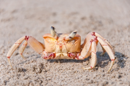 closeup of a crab photo