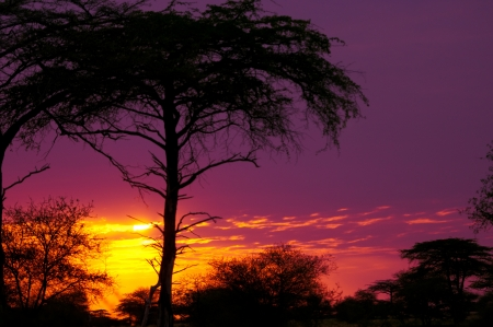 game reserve: sunset in tanzania - national park selous game reserve Stock Photo