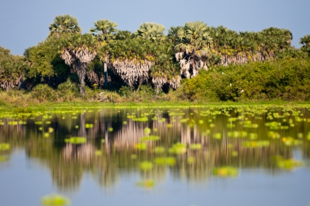palm trees reflecting in lake manze - national park selous game reserve in tanzania