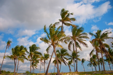 palm trees on the beach - national park saadani in the indian ocean in tanzania Stock Photo