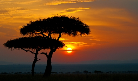 sunset in the national park masai mara in kenya