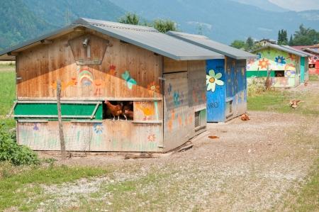 free wheeling happy hens on a chicken farm Editoriali