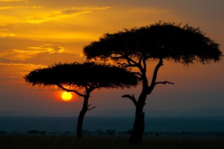 sunset in the national park masai mara in kenya