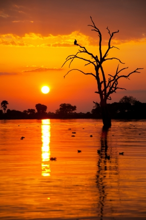 romantic sunset on the lake manze in africa - national park selous game reserve in tanzania
