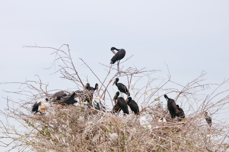 open billed storks in a shrubbery - national park selous game reserve in tanzania east africa photo